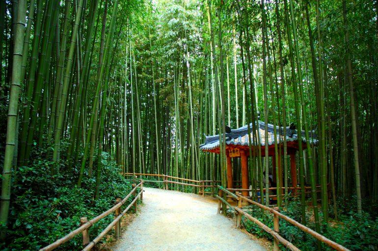 Datant de bambou
