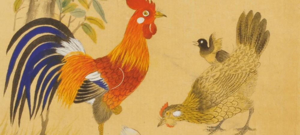 닭 animaux