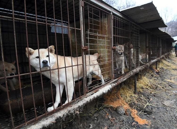 Un éleveur de viande canine jugé et condamné