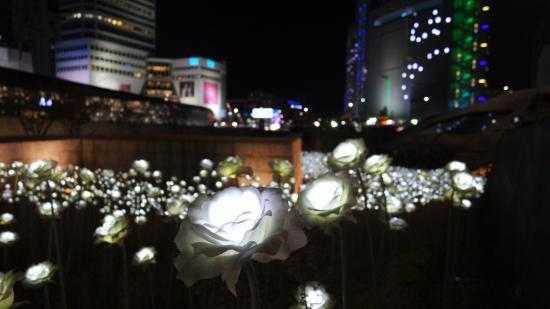 nouvel an à Séoul - parc des roses LED