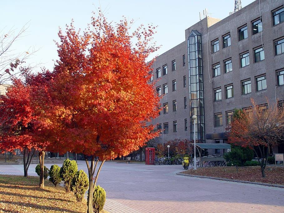 Université de Sungkyunkwan vie universitaire - éducation coréenne